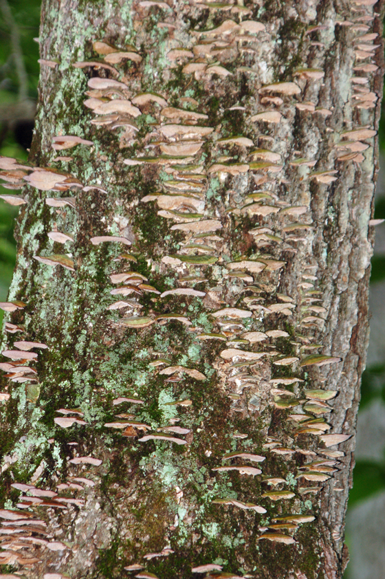 fungus-on-tree!-copy.jpg