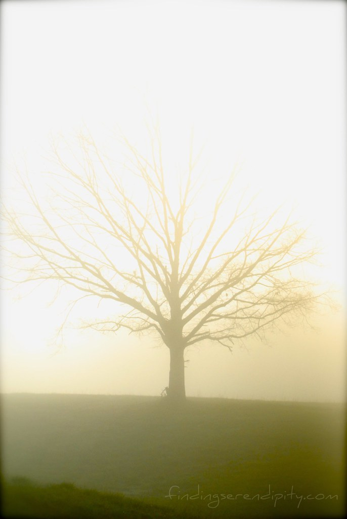 tree in morning haze