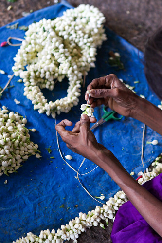 Threading Garlands of Jasmine Flowers