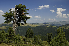 Katun landscape2 (cokanj) Tags: nature rural landscape nikon d70s katun montenegro conifer bor crnagora pejzaz mvugdelic souutheasteurope