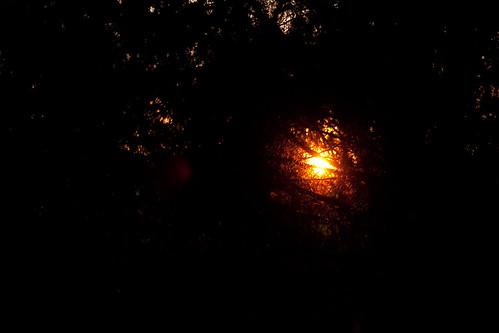 sunsetjuniper