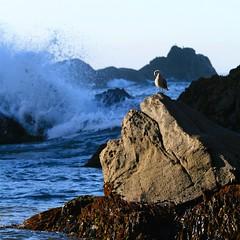 Tucked (yankeediva) Tags: ocean blue vacation rocks solitude waves bigsur pfeifferbeach crashingwave seagullcalifornia