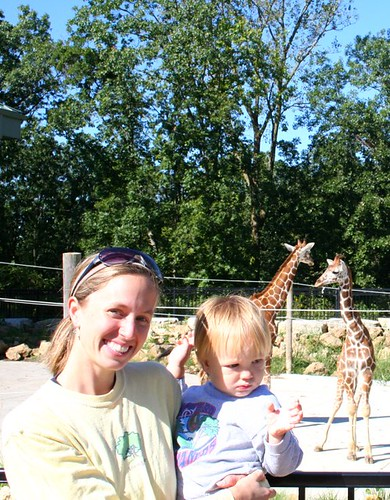 me will and baby giraffes