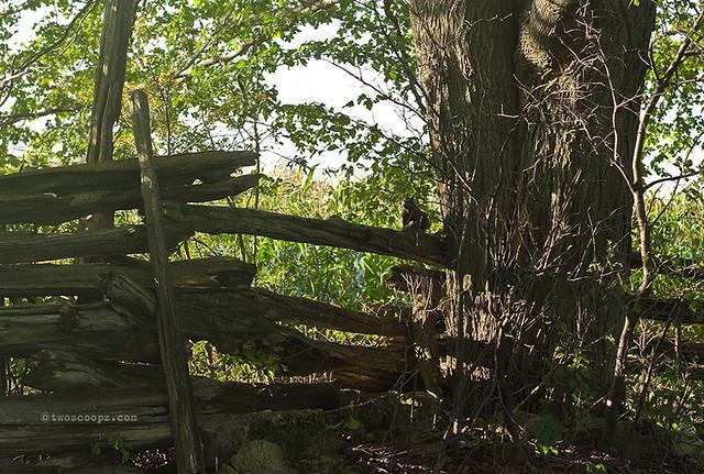 spy fence 246/365