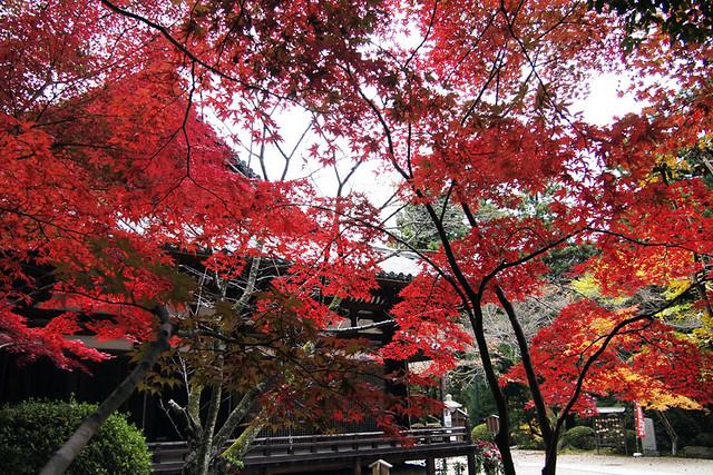 101115_094924_霊山寺_本堂(国宝)