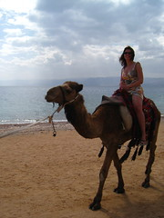 camel ride on Aqaba beach, Giordania (Kristel Van Loock) Tags: beach redsea jordan camel plage spiaggia aqaba jordania chameau camelride kameel giordania