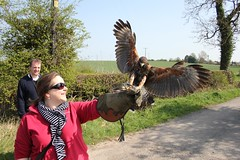 Falconry Day_1247