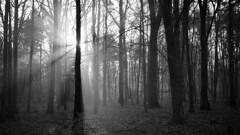 *** (pszcz9) Tags: przyroda nature natura las forest słońce sun poranek morning mgła fog mist forestimages drzewo tree pejzaż landscape beautifulearth sony a77 bw blackandwhite monochrome czarnobiałe