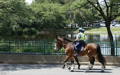 Boston's Finest Protecting the Esplanade Ahead of 4th of July Fireworks and Holiday Pops Concert (Harry Lipson) Tags: protect police boston esplanade storrow horses mounted patrol 4thofjuly harrylipson harrylipsoniii
