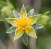 petal-less (kimbenson45) Tags: alpine alps schweiz suisse swiss switzerland closeup differentialfocus flower green macro nature outdoors pattern plant shallowdepthoffield yellow