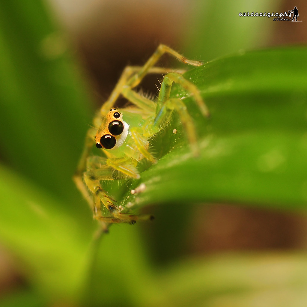 Green Little Jumper | Sedim Eco Park (by Sir Mart Outdoorgraphy™)