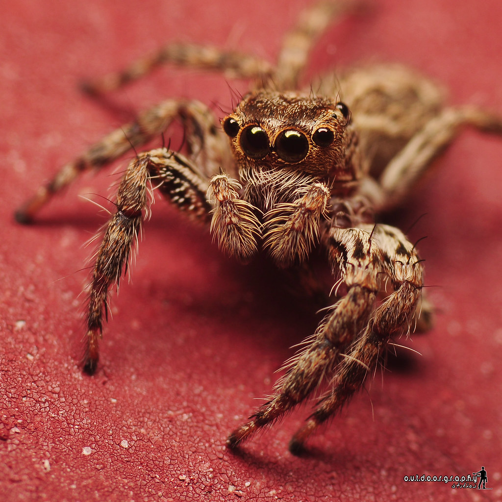 Jumper Jumper on the wall (by Sir Mart Outdoorgraphy™)