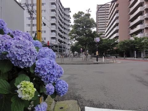 県立大学(京急安浦)・絶やすうららかさ