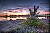 Trunk (Kansas Poetry (Patrick)) Tags: sunset lawrence kansas bakerwetlands naturesgarden wakarusawetlands sleepypatricklovesnancy