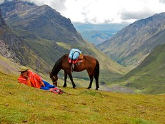 Resting (chrisstreeter) Tags: horse peru southamerica hiking canvas valley porters siteheader larestrek larestrekday2 60225mm southamericatrip2010