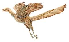 始祖鳥 画像35