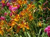 Hyannis Flowers (KingdaKaNitro11) Tags: flowers beauty bright capecod attractive hyannis attractiveness