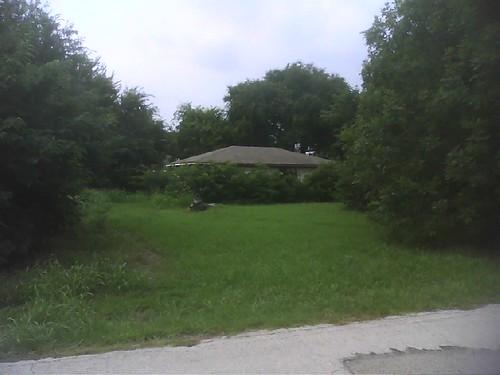 Yard needs help!