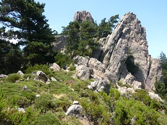 Montée à Punta Furcata : la pointe 1307 m vue depuis le col herbeux au-dessus de la source de Taculaghja