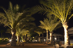 Beach palms on a calm night (Maine Surfer) Tags: blue trees red sea vacation sky sun beach water clouds flag egypt sharmelsheikh el palm sheikh hurgada sinai shar  egypet sharelsheikh