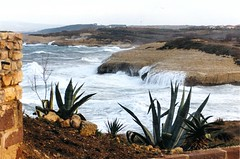Porto Torres (antonè) Tags: sardegna winter sea italy water mare agave balai scogli portotorres antonè