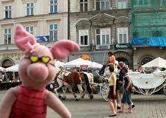 Ferkel auf dem Marktplatz in Krakau