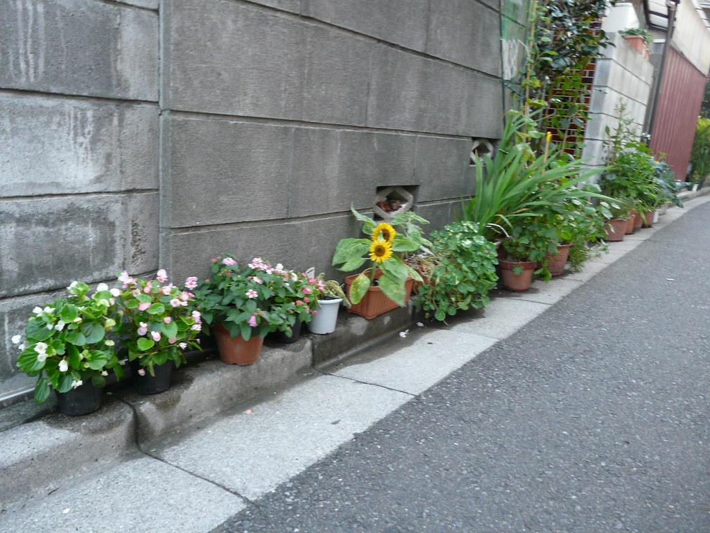 Slim Curbside Planting