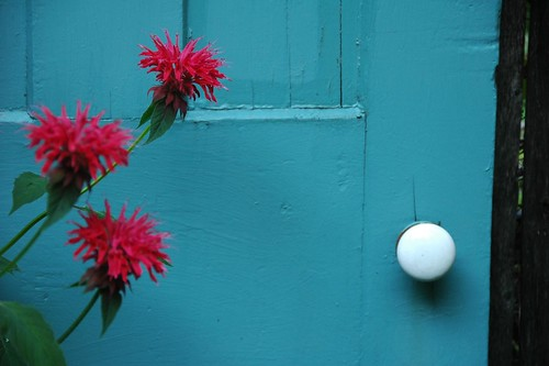 Red Monarda, Blue Door
