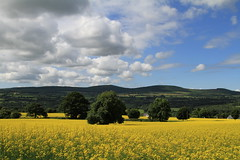 Yellow And Very Mellow (Chris*Bolton) Tags: sky field landscape countryside scenery crop wicklow soe canola rapeseed blueribbonwinner supershot rathdrum bej golddragon peacefulplaces mywinners abigfave rapseed platinumphoto anawesomeshot citrit garrymore theunforgettablepictures theperfectphotographer goldstaraward rubyphotographer