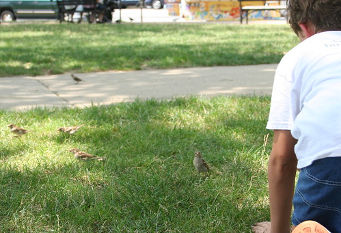 "7/16/10 - The boys would toss bits of leaves and grass, the birds flocked thinking ""food"""
