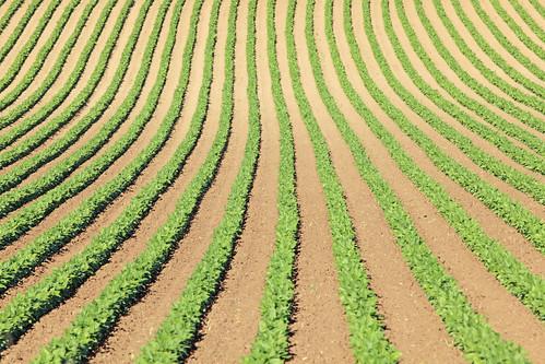 フリー写真素材, 自然・風景, 田畑・農場, アメリカ合衆国, オレゴン州,