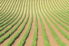 [フリー画像] 自然・風景, 田畑・農場, アメリカ合衆国, オレゴン州, 201007221300