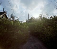 Tainan_20100704_09 (Lordcolus) Tags: sunset plant color tree mamiya film toxic backlight kodak dorm ruin taiwan negative tainan 台灣 160vc 台南 宿舍 flickrmeetup mamiya7ii 鹿耳門 台鹼 n43 epsongtx900 陽台攝影社