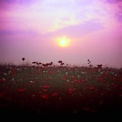 紫色天空 (普渡众神 花) Tags: rvp ps80 勃朗尼卡 碧浪