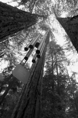 Wind chime and redwoods (raluistro) Tags: santacruz northamerica redwoods brookdale