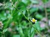 tiny (Luis Eduardo ®) Tags: wild flower macro grass wildflower luismosquera