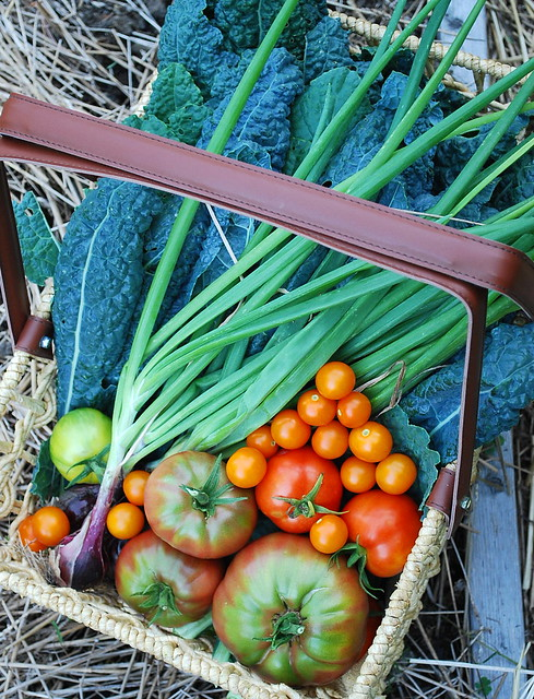 August Harvest 1