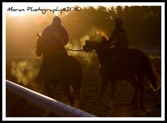 Saratoga at Sunrise (EASY GOER) Tags: vacation horses horse ny sports animals racetrack digital canon fun athletics action saratoga competition upstate running racing entertainment runners athletes races equine competion thoroughbreds 2010 equines sportofkings nyra canonhorses