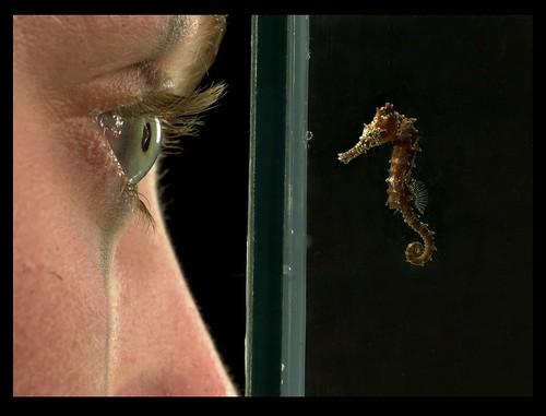 Baby seahorse - flickr.com