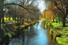 Early Spring on the Avon (David Mor) Tags: park morning newzealand christchurch green water grass river spring ducks avon abigfave sothernisland