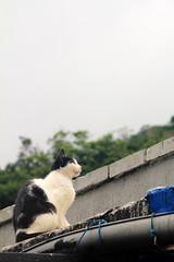 IMG_0518 (翔志) Tags: taiwan taipei 台灣 台北 貓 taipeicounty 台北縣 侯硐 houtong 猴硐 瑞芳鎮 貓村 catvillage rueifangtownship houtongcatstreet 百貓街