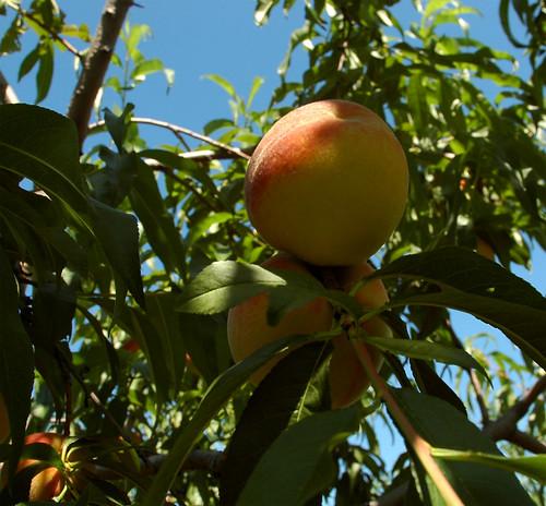 peaches_04