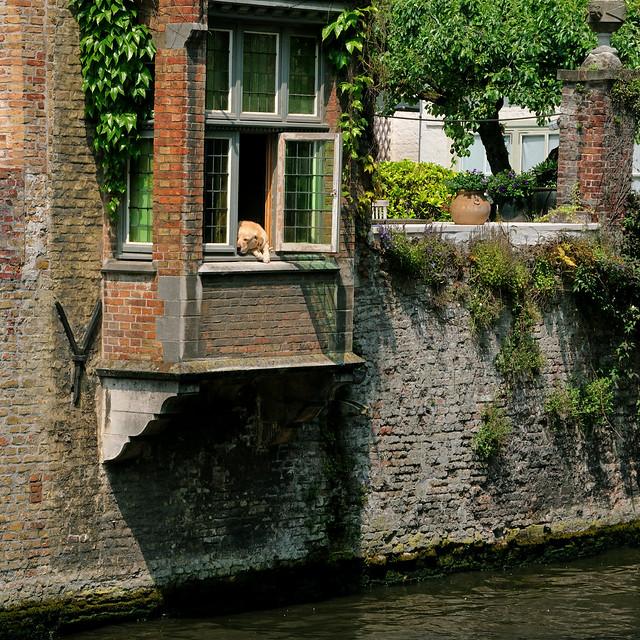 Canal canin