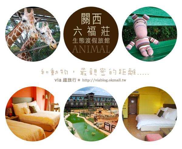 【新竹住宿】來去和動物住一晚~關西六福莊生態渡假旅館