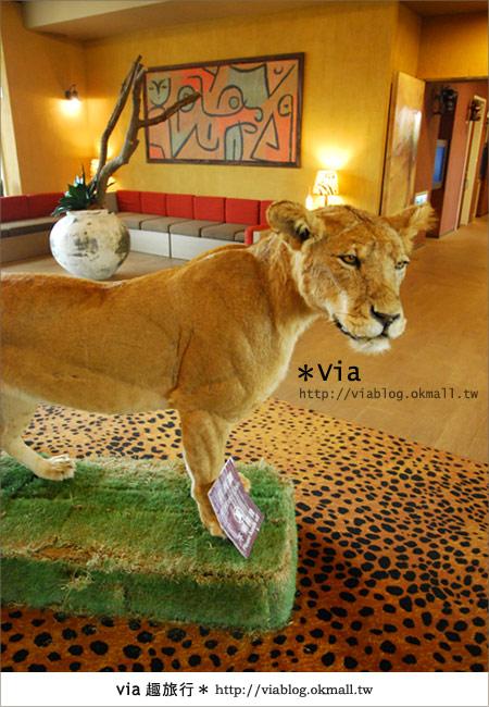 【新竹住宿】來去和動物住一晚~關西六福莊生態渡假旅館5