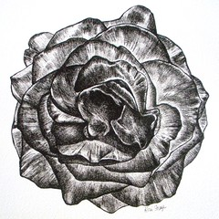 Not Just a Rose (Koni Frazer) Tags: flowers blackandwhite art floral rose ink drawing archival singlerose originaldrawing konifrazer