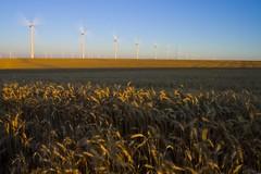spinning turbines (portlandtimbo) Tags: oregon energy northwest wind wheat pacificnorthwest windturbine windfarms windenergy shermancounty
