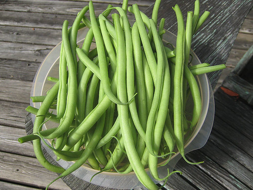 Vegetable Garden - August 11