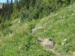 Marmot Pass trail through the flowers.