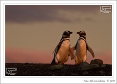 Isla Magdalena (Retrovisor Online) Tags: tierradelfuego ushuaia canaldebeagle glaciar patagônia capehorn pinguins puntaarenas pinguinera glaciarpia fimdomundo antártica cabodehornos terradofogo geleiras pinguinomagallanico channelbeagle cabohorn silvialinhares retrovisoronline glaciarmarinelli islasdelatlánticosur crucerosaustralis elfinaldelmundo baiawulaia baiaainsworth ilhotestucker avenidadasgeleiras glaciarespilotoenena